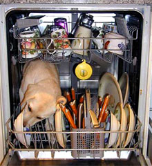 How Dishwashers Really Work