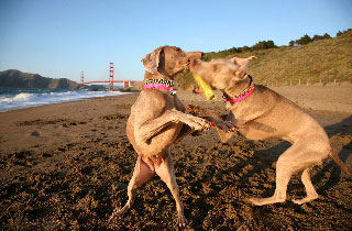 Tallulah and Jubilee at Baker Beach