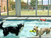 Enchantment Pet Resort and Dog Spa